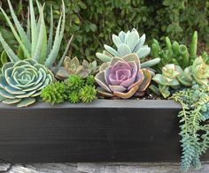 Popular items for succulent planter on Etsy