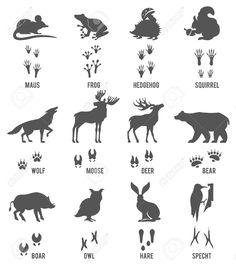 Znalezione obrazy dla zapytania erdei állatok lábnyomai