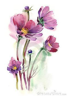 Illustration about Watercolors painting -Cosmos flowers- by artist M. Illustration of blooming, country, environment - 21665553 Watercolor Pictures, Watercolor Cards, Floral Watercolor, Free Watercolor Flowers, Watercolor Quote, Watercolor Water, Watercolor Pencils, Watercolor Illustration, Plant Drawing