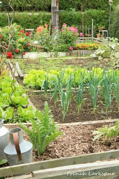 A French Potager
