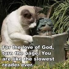 Funny animals with funny sayings .funny animals with funny sayings wallpaper .most popular funny animals seen.funny animals with funny quotes .best funny animals and funny wallpaper . Funny Shit, Funny Cute, The Funny, Funny Memes, Funny Stuff, Cat Stuff, Super Funny, Funny Captions, Funny Grumpy Cat Memes