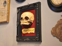 Oddity  Fetal Skull display replica   by GothChicAccessories, $60.00