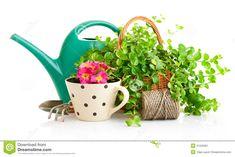 Gardening Stock Photography - Image: 25541182