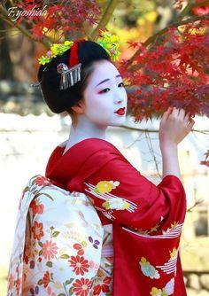 senior maiko Mamefuji of Gion Kobu