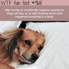 WTF Facts : funny, interesting & weird facts You will find the most interesting facts about dogs on my account. Funny Weird Facts, Wtf Fun Facts, Creepy Facts, Random Facts, Funny Dogs, Cute Dogs, Weird Dogs, Cute Baby Animals, Funny Animals