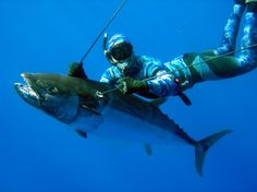 Spearfishing Tuna. Tuna was seen on a dive that was cut from the book.