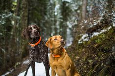 Trail Buddies | Flickr - Photo Sharing! #GSP German Shorthaired Pointer #Braque allemand