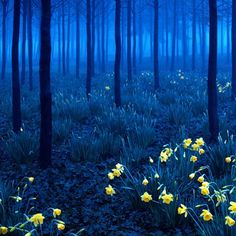 amazing photos of the black forest - Google Search