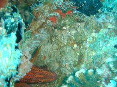 Moray - Diving in Maldives