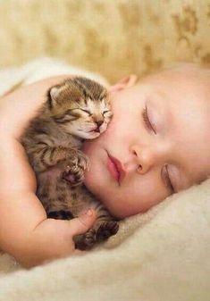Cottage Kittens