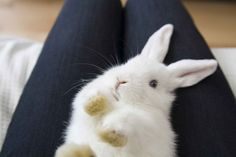 Sooo adorable.  But you shouldn't lay a bunny on HIS BACK PEOPLE!!!!!