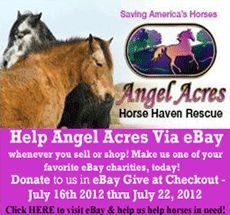 Angel Acres Horse Haven Rescue: An ANTI horse slaughter, Accredited,  non profit horse rescue. We are tackling the issue of homeless horses head-on in a multi-pronged approach. We help horse owners in need of assistance via Mattie's Legacy Fund, we pull horses from the kill pen via Dustin's Dreamer's Fund. We started & launched the grass roots Anti Horse Slaughter Billboard Awareness Campaign, we rescue horses bound for slaughter, retrain them for new careers & adopt them out into loving…
