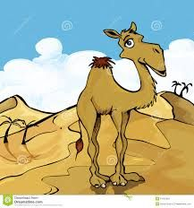 Image result for camel cartoon