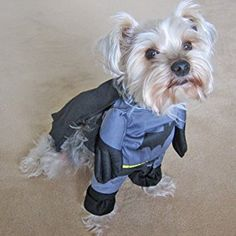 Alfie Pet by Petoga Couture - Superhero Costume Batman - Size: S Animal Halloween Costumes, Dog Halloween, Dog Costumes, Batman Dog Costume, Batman Outfits, Dog Clothes Patterns, Dog Safety, Super Hero Costumes, Love Pet