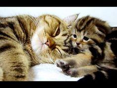 Mom Cat talking to her Kittens. 20 min BONUS video
