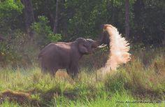 An elephant in Rajaji National Park, India