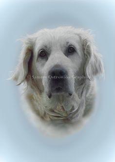Abbie- White Retriever. Digital Illustration.