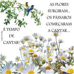 As flores surgiram...os pássaros começaram a cantar. É tempo de cantar!