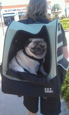 My pug is demanding that I get one of these for her.