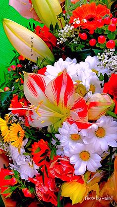 Flower Power Beautiful Flowers Images, Beautiful Flowers Wallpapers, Beautiful Flowers Garden, Flower Images, Flower Pictures, Exotic Flowers, Amazing Flowers, Beautiful Roses, Pretty Flowers
