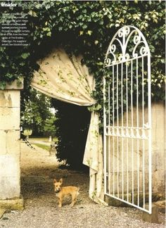 arch, archway, curtain, dog, garden, gate, home, ivy, outdoors, vines, welcome!