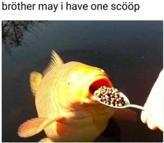 20 Best Funny Photos for Tuesday Night. Serving only the best funny photos in 2019 that will help you laugh today.