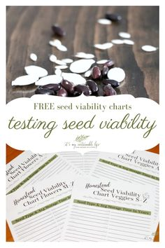 By using our seed viability chart and learning how to test seeds for viability is an easy way to ensure success in your gardening efforts.  These two easy seed viability tests take little time & reap great, well, green results! | It's My Sustainable Life @itsmysustainablelife #seedviability #seedviabilitychart #checkingseedviability #vegetableseedviability #testingseedviability #itsmysustainablelife Gardening For Beginners, Gardening Tips, Garden Projects, Fun Projects, Minimalist Garden, Seed Germination, Grow Your Own Food, Seed Starting, Flower Seeds