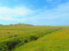 Grass land Dyffryn Gwynedd Wales from Sarah Kay