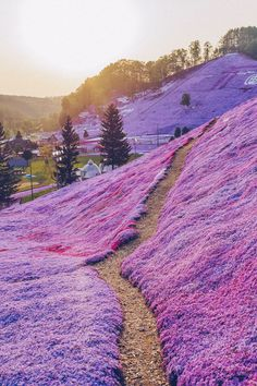 12 Beautiful Places That Belong on your Japan Bucket List Shiba Sakura in Hokkaido Japan - Easily one of the top places to travel in Japan! The Most Beautiful Places You Have to Add to your Japan Bucket List. This place is crazy beautiful! Check out these Top Places To Travel, Cool Places To Visit, Japan Places To Visit, Travel Stuff, Restaurants In Paris, Beautiful Places In Japan, Most Beautiful, Beautiful Places To Visit, Amazing Places