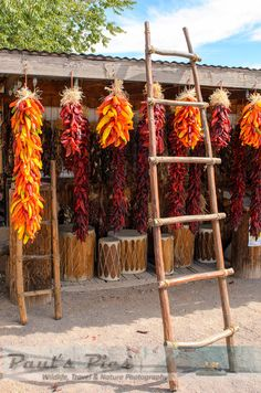 Chili Peppers drying at New Mexico Mercantile 8x12 by PaulsPics, $19.95
