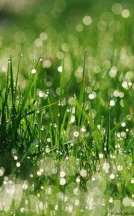 morning dew on fresh grass