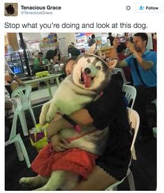 23 Tweets About Dogs To Remind You That There Is Good In The World