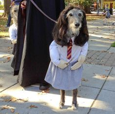 Hermione, is that you?