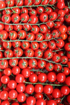 Tomatoes as art...