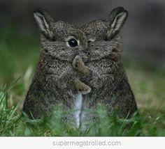 tehe rabbits