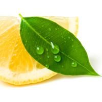 Eucalyptus Lemon Essential Oil | Candora Soap and Soap Making Supplies