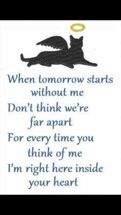Here is Pet Sympathy Quote Ideas for you. Pet Sympathy Quote sympathy cards for pets a loyal companion and best friend. Pet Quotes Cat, Pet Poems, Animal Quotes, Animal Poems, Cat Loss Quotes, Pet Loss Grief, Dog Loss, Lost Quotes, Animal Illustrations