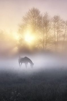 Misty morning in the horse's pasture at sunrise All The Pretty Horses, Beautiful Horses, Animals Beautiful, Simply Beautiful, Photo Animaliere, Jolie Photo, Horse Pictures, Horse Photography, Dream Photography