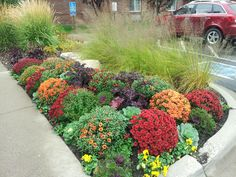Beautiful fall color at a commercial property maintained by Barrett Lawn Care. #mums #kale #pansies #ornamentalgrass #fallflowers