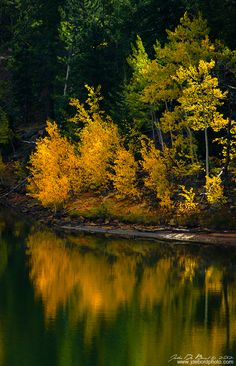 Reflections Of Gold by kkart.deviantart.com on @DeviantArt