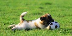 Olio di neem per cani, un aiuto efficace per i nostri amici a 4 zampe @greenpinkorg