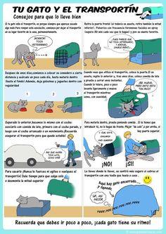 Sigue estos consejos para que transportar a tu gato no sea una completa pesadilla: | 12 Infográficos prácticos que todo amante de los gatos necesita