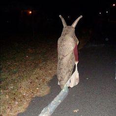 2headedsnake:  Slug.