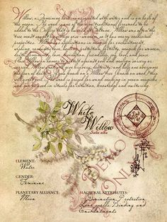 Grimoire, Spell, Herbal correspondence, and Book of Shadows Pages, Practical Magic; The Cackling Cauldron ~ Book of Shadows: Spell set 6 Magic Herbs, Herbal Magic, Vintage Diy, Vintage Paper, Witch Herbs, Bound Book, Practical Magic, Book Of Shadows, Witchcraft