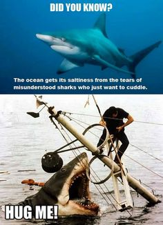 Did you know this about sharks - meme - http://jokideo.com/did-you-know-this-about-sharks-meme/