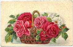 vintage postcard #roses