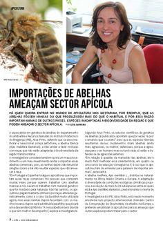Importações de abelhas ameaçam sector apícola