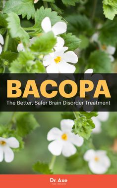 8 Bacopa Benefits include: antidepressant,stress reducer, memory improvement and more!