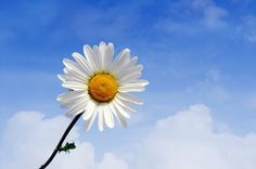 Daisy with blurred clouds