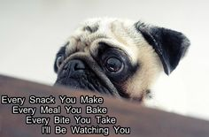 Funny Pug Dog Meme Pun LOL so funny be even funnier if the pug had on a police hat (cuz the re made song is by the police)